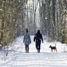 Couple waling with dog in snow surround by trees