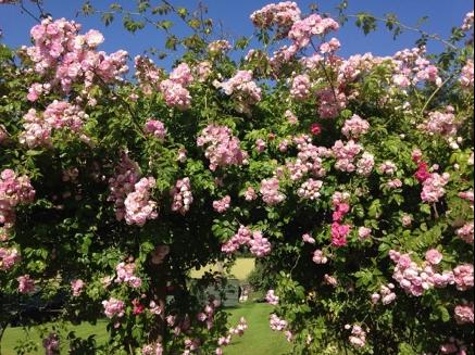 Pitcurran House gardens